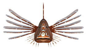 Pterois or Lionfish. 3D digital render of a Pterois or lionfish, a genus of venomous marine fish from the Indo-Pacific, isolated on white background Stock Images
