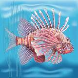 Pterois radiata in an aquarium on a blue background. Vector Pterois radiata in an aquarium on a blue background Vector Illustration