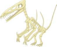 Pteronodon骨骼动画片 免版税库存照片
