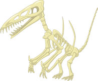 Pteronodon skeleton cartoon Royalty Free Stock Photo