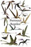 Pterosaur爬行动物 库存例证