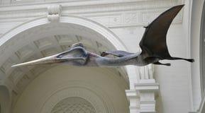 Pterosaur стоковые фотографии rf