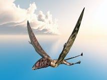 Pterosaur Dimorphodon Stock Photos