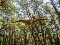 Pterosaur nella foresta fotografie stock