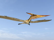 Pterosaur Pteranodon Royalty Free Stock Photos