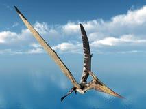 Pterosaur Pteranodon Stock Photos