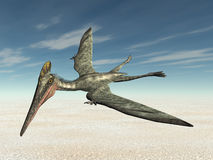 Pterosaur Pterodactylus Stock Photography