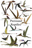 Pterosaur Reptiles. A collection of various Pterosaur reptiles from different prehistoric periods of Earth`s history Royalty Free Stock Photo