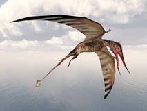 Pterosaur Rhamphorhynchus Royalty Free Stock Photography