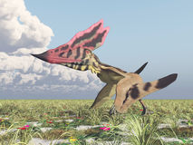 Pterosaur Thalassodromeus Royalty Free Stock Photography