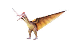 Pterosaur. On a white background stock images