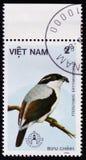 Pteruthius erythropterus lub czerwonoskrzydła dzierzby papla, serie poświęcać ptaki około 1986, Zdjęcie Stock