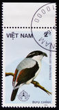 Pteruthius erythropterus or red-winged shrike babbler, series devoted to the birds, circa 1986 Stock Photo