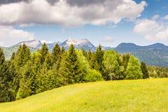 Pâturage dans les alpes de la Bavière Image libre de droits