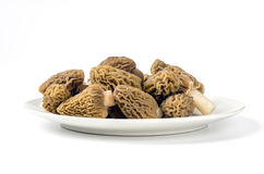 Ptychoverpa bohemica. Edible mushrooms with excellent taste, grow in spring, Ptychoverpa bohemica Royalty Free Stock Images