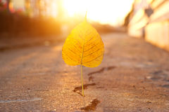 Puñalada amarilla de la hoja abajo en la calle de la grieta en el fondo de la puesta del sol Fotografía de archivo
