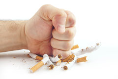 Puño humano que rompe los cigarrillos en el fondo blanco Fotografía de archivo
