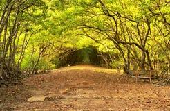 Può il Vietnam del sud della foresta della mangrovia del gio immagini stock libere da diritti