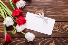 Puści etykietki, czerwieni i bielu tulipany, kwitną Obraz Royalty Free