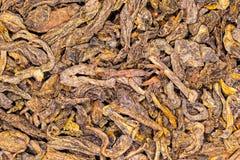 PU joven Erh del té rojo Foto de archivo libre de regalías