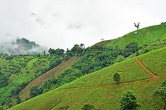 山的看法在Pua区 库存图片
