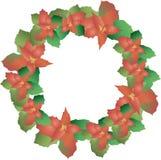puansettia,圣诞节玫瑰,在白色的圣诞节星花圈  绿色和红色叶子,梯度 库存照片
