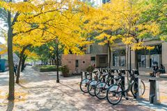 Public bicycle and fall color