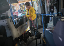 Public bus with pets. A woman holding her pets pays her ticket on a public transport bus in the spanish island of mallorca Royalty Free Stock Images