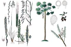 Illustrations of plants. Stock Images