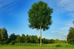 PUBLIC DOMAIN DEDICATION digionbew 10 june july 27-06-16 Lonely tree LOW RES DSC03303 stock photography