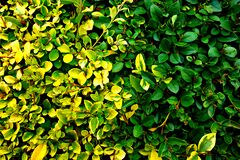 PUBLIC DOMAIN DEDICATION digionbew 10. june july 29-06-16 Hedge surface LOW RES DSC03536 Royalty Free Stock Photo
