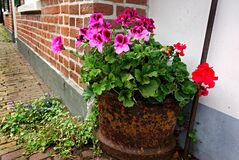 PUBLIC DOMAIN DEDICATION digionbew 10. june july Rusty pot of flowers LOW RES DSC03585 Stock Image