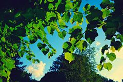 PUBLIC DOMAIN DEDICATION - Pixabay - digionbew 12. 13-07-16 Leaves against blue skies LOW RES DSC05970 Royalty Free Stock Photography