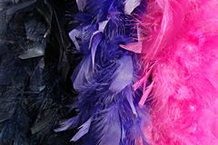PUBLIC DOMAIN DEDICATION Pixabay - digionbew 12. 15-07-16 Feather boas dark blue, blue, pink LOW RES DSC06396 Stock Images
