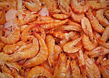 PUBLIC DOMAIN DEDICATION - Pixabay - digionbew 12. 15-07-16  Giant shrimp LOW RES PDSC06378 Royalty Free Stock Photo