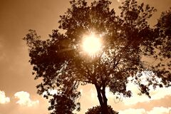 PUBLIC DOMAIN DEDICATION Pixabay - Pexels digionbew 14. 06-08-16 Sun through tree top LOW RES DSC08135 Royalty Free Stock Photos