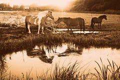 PUBLIC DOMAIN DEDICATION - Pixabay-Pexels digionbew 15. 12-08-16 Horse in reflection LOW RES DSC09056 Stock Image