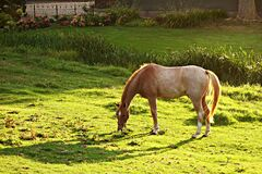 PUBLIC DOMAIN DEDICATION - Pixabay-Pexels digionbew 16. 29-08-16 Horse in the garden LOW RES DSC01122 Royalty Free Stock Photo