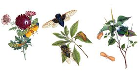 Illustration of butterflies and plants. Public domain. An epitome of the natural history of the insects of China. Bensley, 1798 Stock Photos
