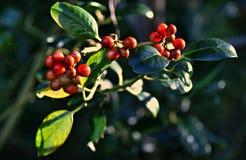 PUBLIC DOMAIN PIXABAY VIIIW 27-09-15 -- Happy Berries Royalty Free Stock Photo