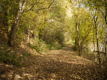 Public footpath. Forest with public footpath in autum Royalty Free Stock Photography