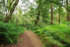 Public footpath in the woodlands Stock Photo