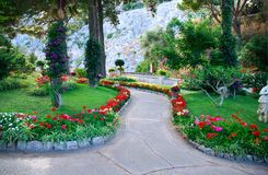 Public garden. Flower park on Capri island Royalty Free Stock Photo