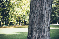 Public garden in autumn Royalty Free Stock Photo