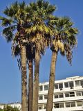 In the public garden Jardin Habib Thameur, Tunis, Tunisia. Stock Photos