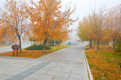 The public garden in the mist autumn Stock Photo