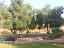 Public garden. A public park in my neighborhood in Rosh Ha`ayin, Israel Stock Photo