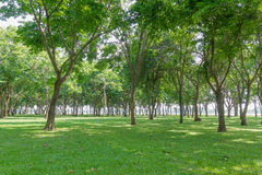 Public green park Royalty Free Stock Images