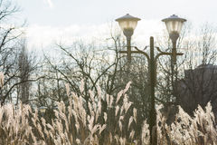 Public lamp, dry grass and bare trees. Horizontal winter view wi Royalty Free Stock Photo