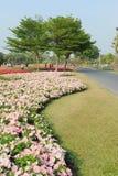 Public landscape gardening Stock Images